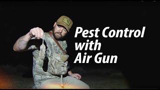Rat Hunt with Quiet Air Rifle: Steve Criner - American Airgunner