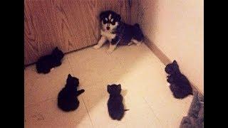 犬と猫の喧嘩・仲良し・じゃれているシーンを集めました!思う存分笑っ...