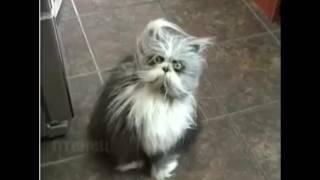 СУПЕР находка - Ёшкин кот !!!Кот из ужасов#КОТ ОБОРОТЕНЬ, #кот дедок,страшный кот !!!