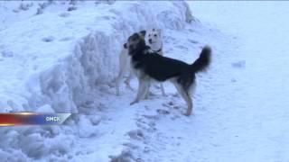 В Омске нарушают правила выгула собак