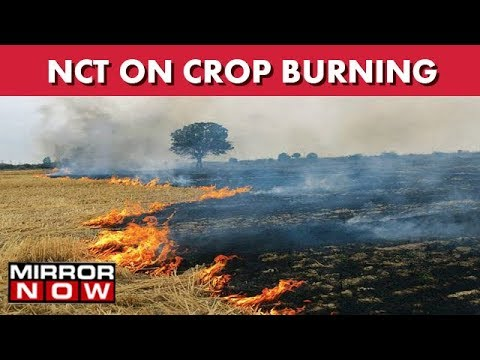 Punjab : Crop Burning Low As Compared To Last Year I The News