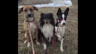 Freedom Paws'-- Dogs In Training