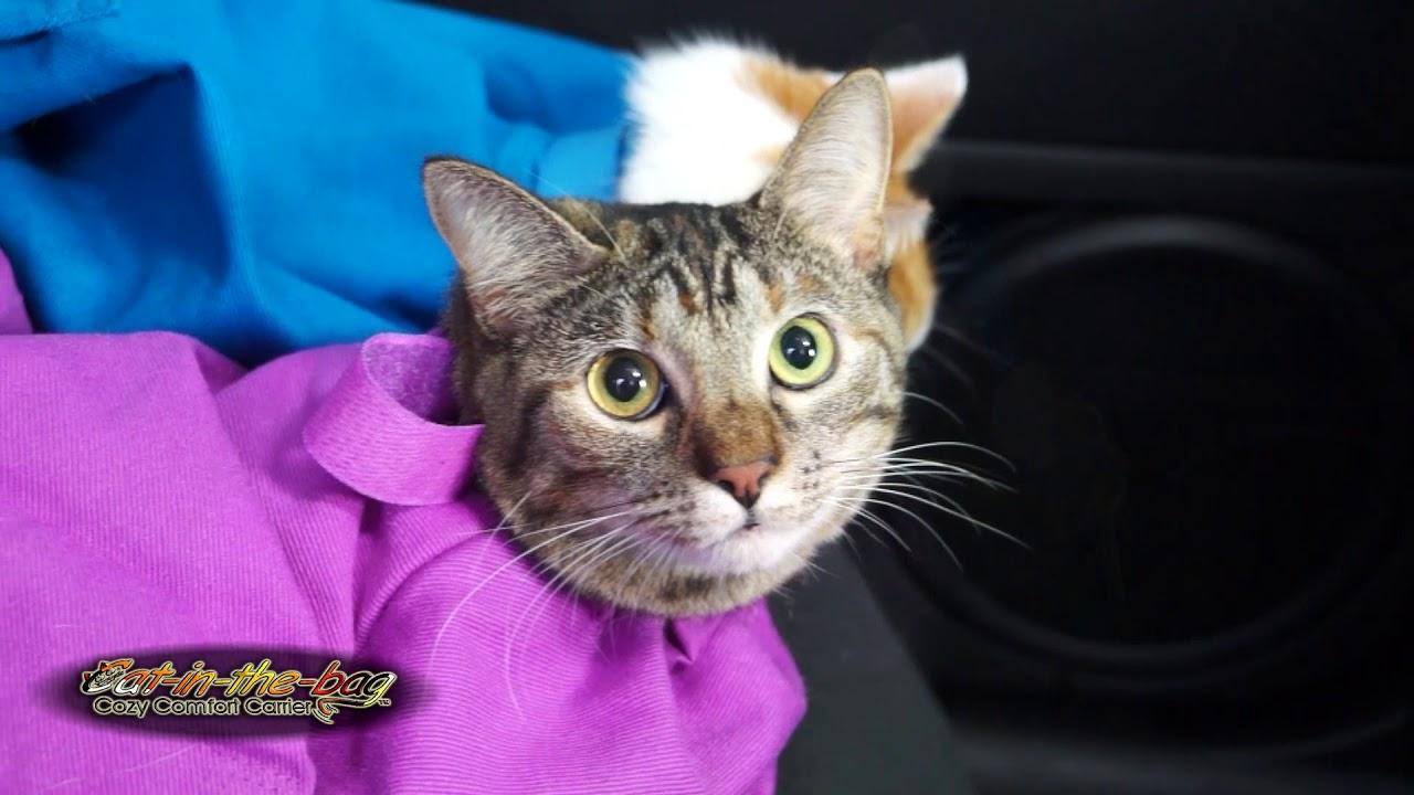 Cat In The Bag   Vet Visit Ad