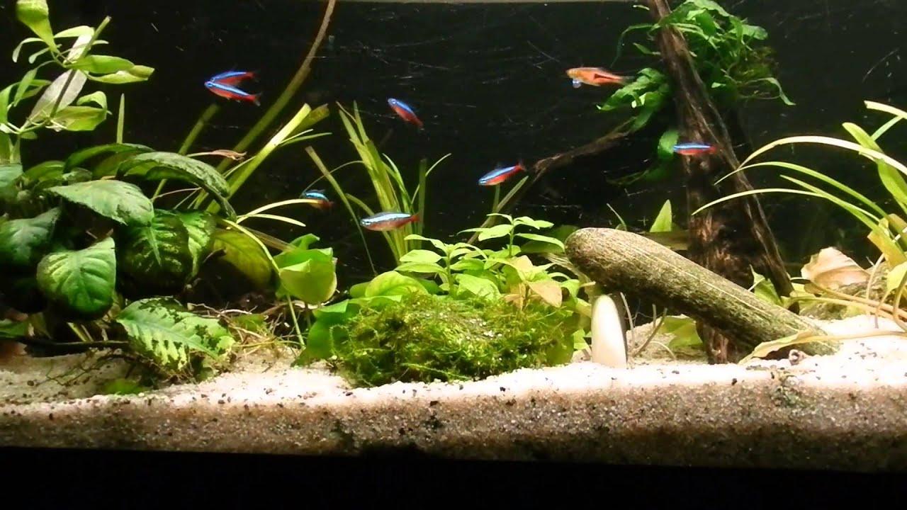 Mon aquarium de 120l youtube for Aquarium 120l