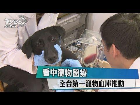 看中寵物醫療 全台第一寵物血庫推動【2017-11-28 】