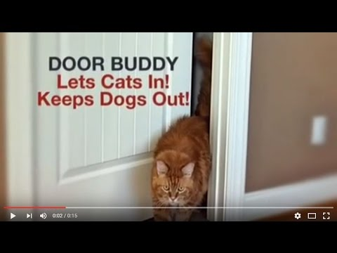Why Do Dogs Eat Cat Poop Door Buddy Holds Door Open For Cat To Keep