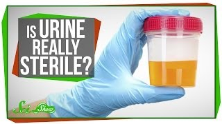 Is Urine Really Sterile?