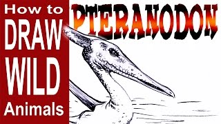 How to Draw a Pterandon (Advanced- Spoken Tutorial)