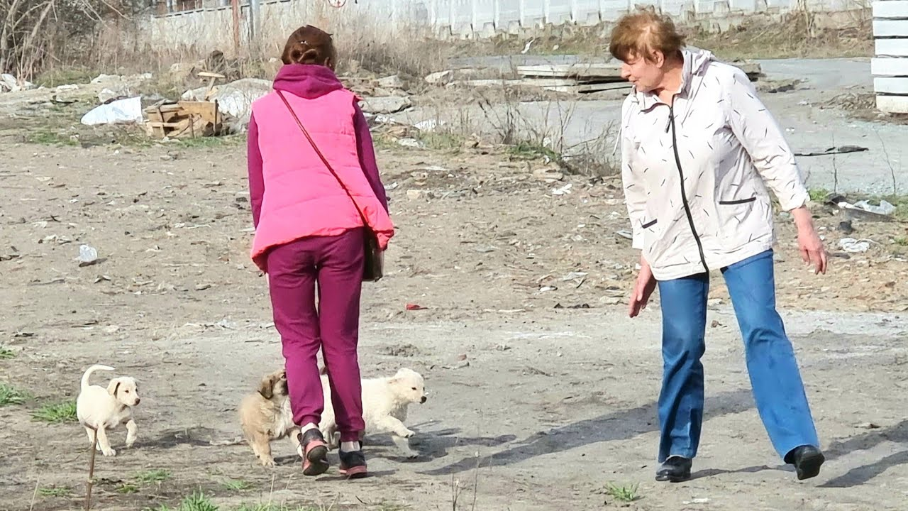 Четыре щенка ютились под теплотрассой и боялись выйти к людям