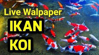 Live Walpaper Ikan Koi Paling Keren. screenshot 5