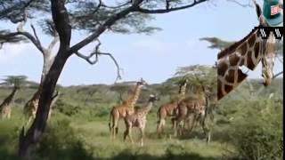 Giraffe lebt im Haus Part 2 [Gronkh]  Tus jacaylka aad gariga