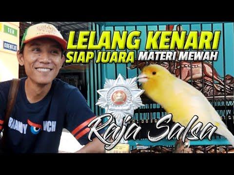 Download Lagu TOBIL CUP : LELANG KENARI GACOR ! Raja Salsa Lagu Mewah Goyang Hot Artis