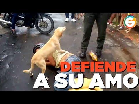 Perro defiende a su amo borracho dormido en la calle