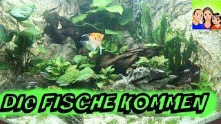 Unser Aquarium - Die Fische kommen - DoJo´s Spielzeugwelt