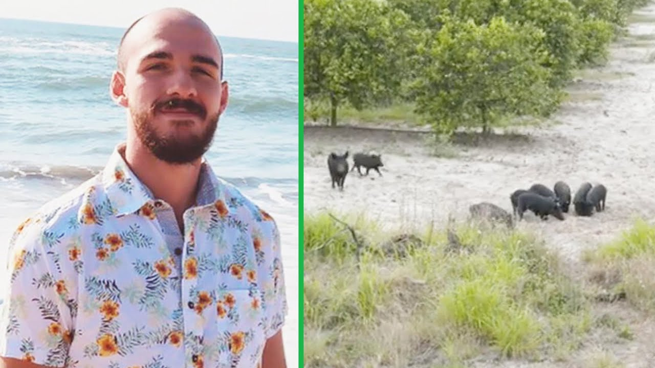 Was Brian Laundrie Killed by Wild Swamp Pigs?