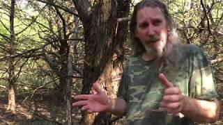 Cedar, The Fatwood Alternative