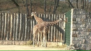 Zoopark Erfurt - Teil 1