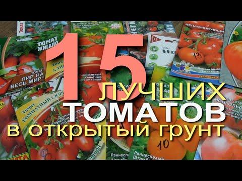 ЛУЧШИЕ ТОМАТЫ для ОТКРЫТОГО ГРУНТА. Советы от ЗЕЛЕНОГО ОГОРОДА. | открытый | томатов | теплица | томаты | огород | лучшие | сорта | самые | овощи | грунт