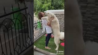اجمل كلب ابيض كيوت مع موسيقى رائعة