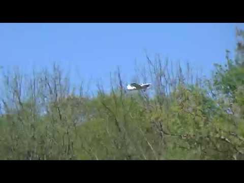 Piper PA-28-180 Cherokee, (N7913N), Flying to Sikeston Memorial Muni