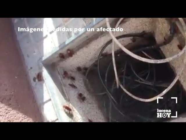 VÍDEO: El Ayuntamiento insiste en que la empresa de control de plagas sigue trabajando para acabar con la plaga de cucarachas