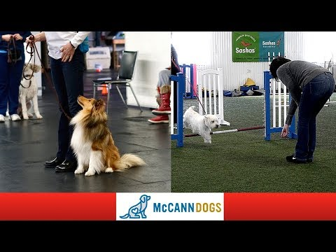 First Time Playing Dog Agility And Rally Obedience