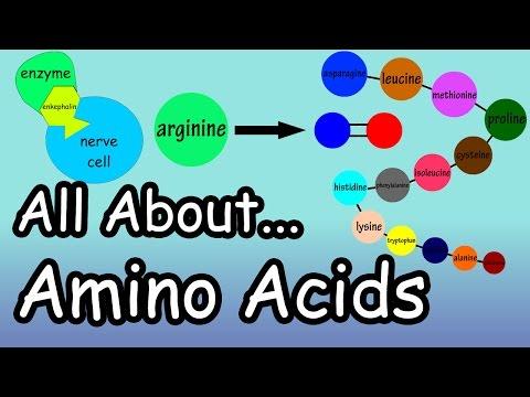 Amino Acids What are Amino Acids What Do Amino Acids Do