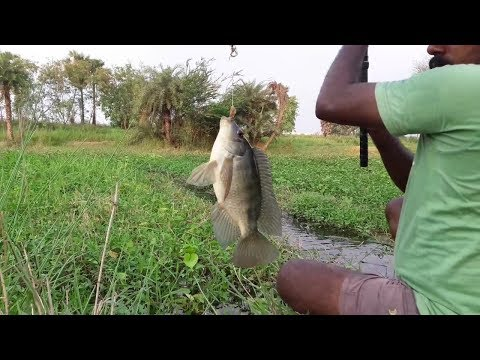 Fish hunting thumbnail
