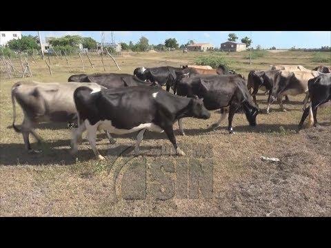 Continúan los problemas por sequía en Dajabón