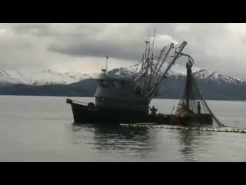Saildrones explore the Bering Sea