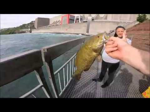 Fishing Below Niagara Falls!!! (nypa Fishing Platform)