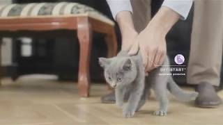 Корм PRO PLAN® Junior для котят с комплексом OPTISTART®
