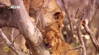 Chiến trường đi săn khóc liệt 🐘 Động Vật Hoang Dã   🔊 Thuyết Minh