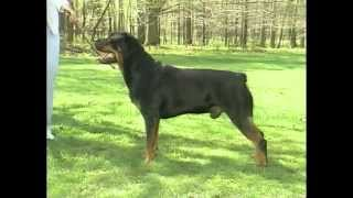 Rottweiler - Akc Dog Breed Series