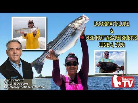 June 4, 2020 Long Island  Fishing Report