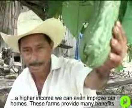 Honduras Cerro Azul Diversify Farms Project