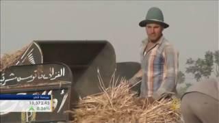 شكوك عالمية بشأن سلامة صادرات مصر الزراعية