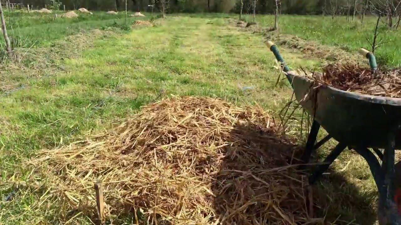 Plantation de pomme de terre sous paille sans travail d - Pomme de terre sous paille ...