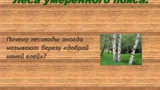 Леса умеренного пояса учебная презентация