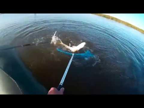 Жерлицы на Иртыше Видео! Видео сёрфинг