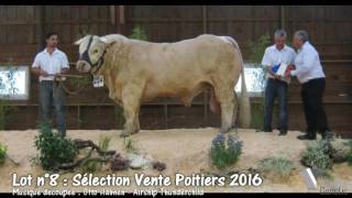 Lot 8 Sélection vente Poitiers 2016 by Simon Genetic