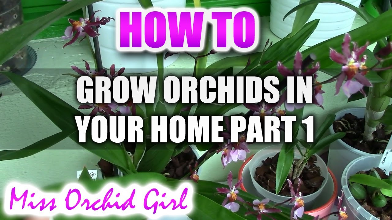 How to grow orchids at home 4