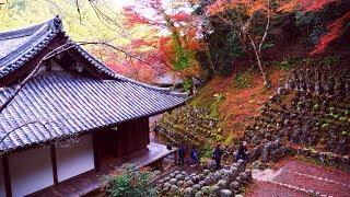 JG 4K HDR 京都 愛宕念仏寺の紅葉(重文) Kyoto,Otagi Nenbutsudera in Autumn(Cultural Property)