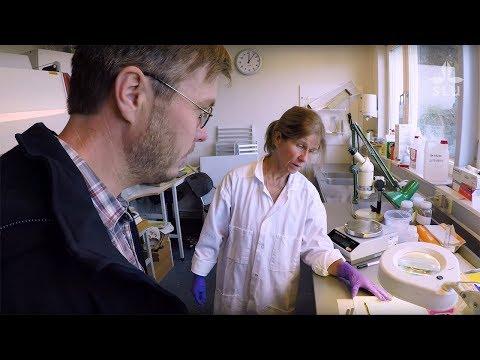 Anti Vasemägi – Professor Of Fish Biology At SLU