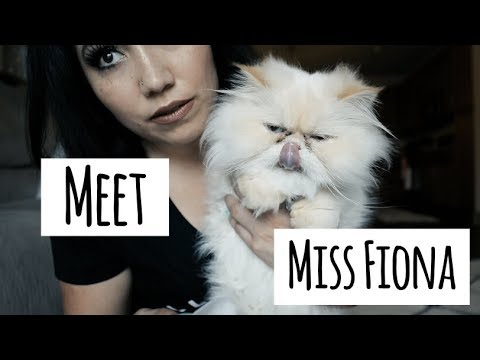 How To Clean Out Your Persian Cat's Eyes