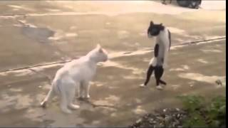 смотреть кошки видео приколы