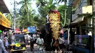 Elephant Festival, Kerala