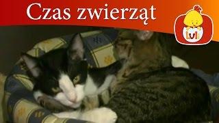 Czas zwierząt - Kot + Pelikan, dla dzieci Luli TV - Videos for babies