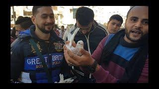 لقاء رائع من داخل سوق #جمهورية_المحله للحمام Egyptian pigeon's market 2018