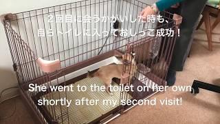 トイレのしつけ、大成功!Potty training inside the house thumbnail
